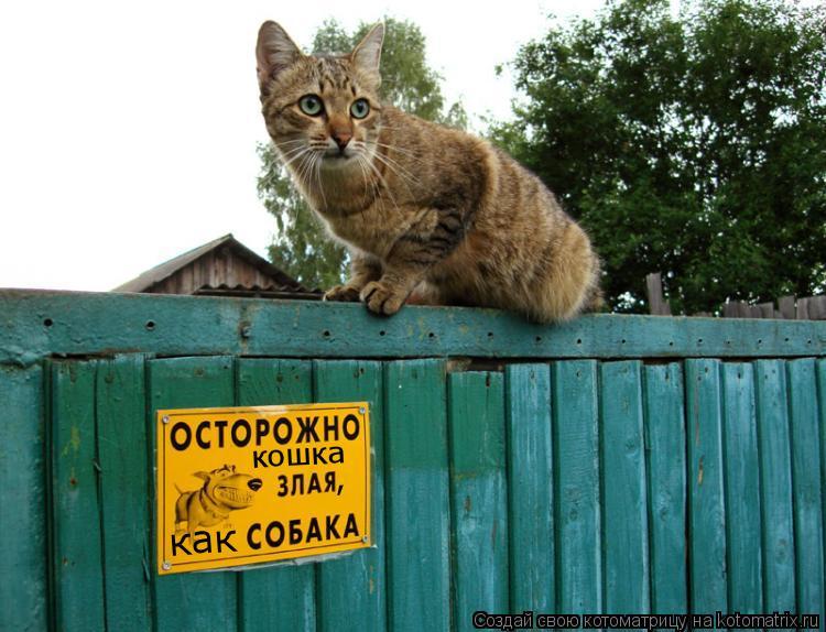 кошка , как