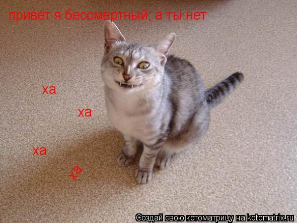 Котоматрица: привет я бессмертный, а ты нет ха ха ха ха