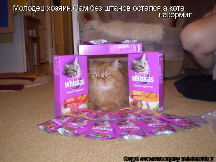 Котоматрица: Молодец хозяин.Сам без штанов остался,а кота  накормил!