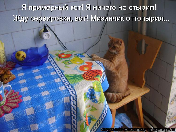 Котоматрица: Я примерный кот! Я ничего не стырил! Жду сервировки, вот! Мизинчик оттопырил...