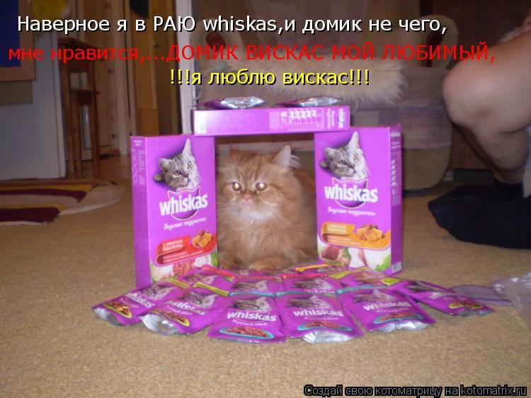 Котоматрица: Наверное я в РАЮ whiskas,и домик не чего, мне нравится,...ДОМИК ВИСКАС МОЙ ЛЮБИМЫЙ, !!!я люблю вискас!!!