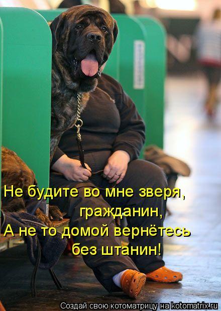 Котоматрица: Не будите во мне зверя,  А не то домой вернётесь без штанин! гражданин,