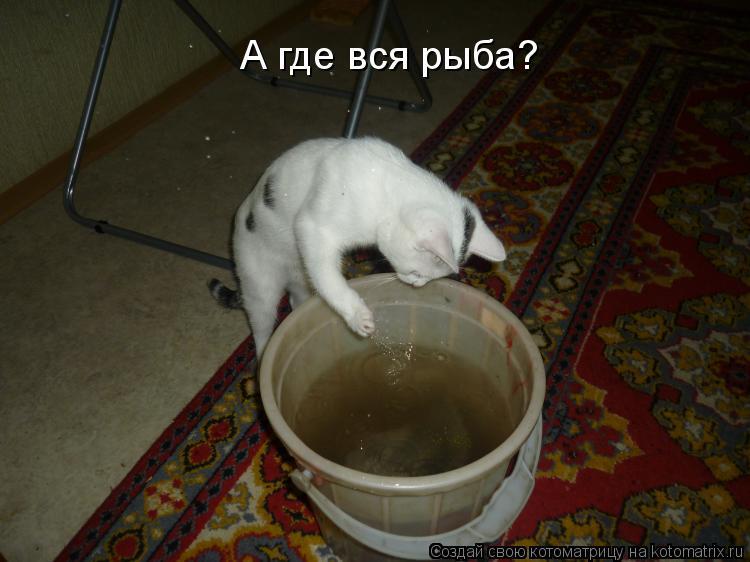 Котоматрица: А где вся рыба?