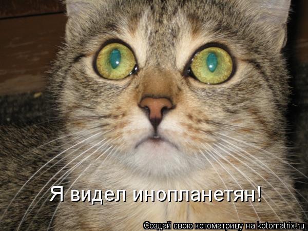 Котоматрица: Я видел инопланетян!