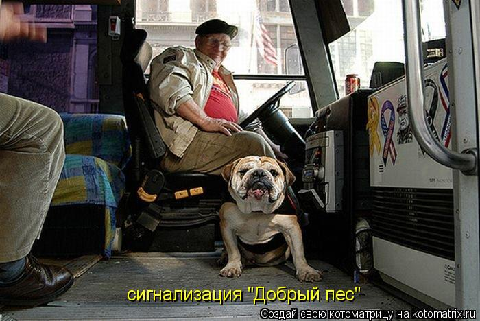 "Котоматрица: сигнализация ""Добрый пес"""