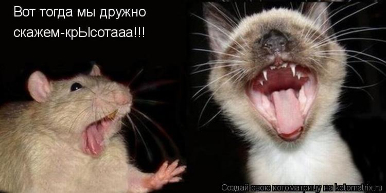 Котоматрица: Вот тогда мы дружно скажем-крЫсотааа!!!