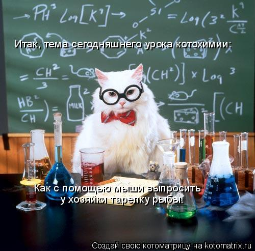 Котоматрица: Итак, тема сегодняшнего урока котохимии: Как с помощью мыши выпросить у хозяйки тарелку рыбы.