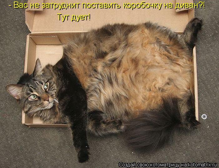 Котоматрица: Тут дует! - Вас не затруднит поставить коробочку на диван?!