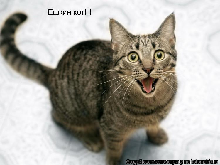 Котоматрица: Ешкин кот!!!