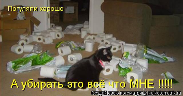 Котоматрица: Погуляли хорошо А убирать это всё что МНЕ !!!!!