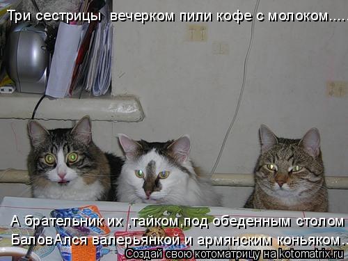 Котоматрица: А брательник их ,тайком,под обеденным столом  БаловАлся валерьянкой и армянским коньяком.... Три сестрицы  вечерком пили кофе с молоком.....