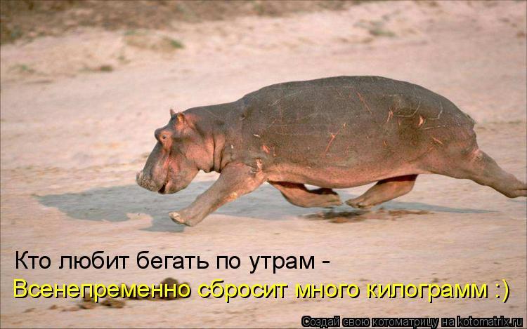 Котоматрица: Кто любит бегать по утрам -  Всенепременно сбросит много килограмм :)