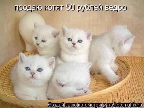 Котоматрица: продаю котят 50 рублей ведро