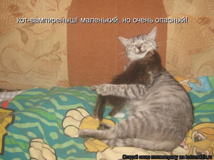Котоматрица: кот-вампиреныш! маленький, но очень опасный!