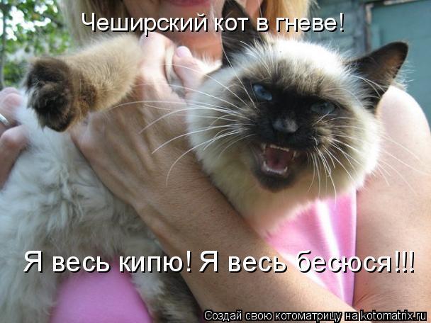 Котоматрица: Чеширский кот в гневе! Я весь кипю! Я весь бесюся!!!