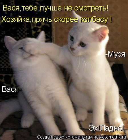 Котоматрица: Вася,тебе лучше не смотреть! Хозяйка,прячь скорее колбасу ! Эх!Ладно! Вася- -Муся
