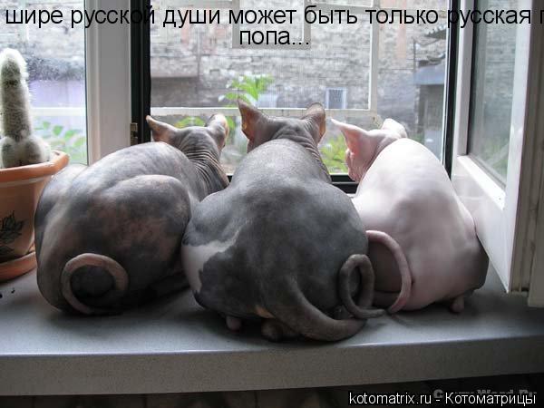 фото русская попа