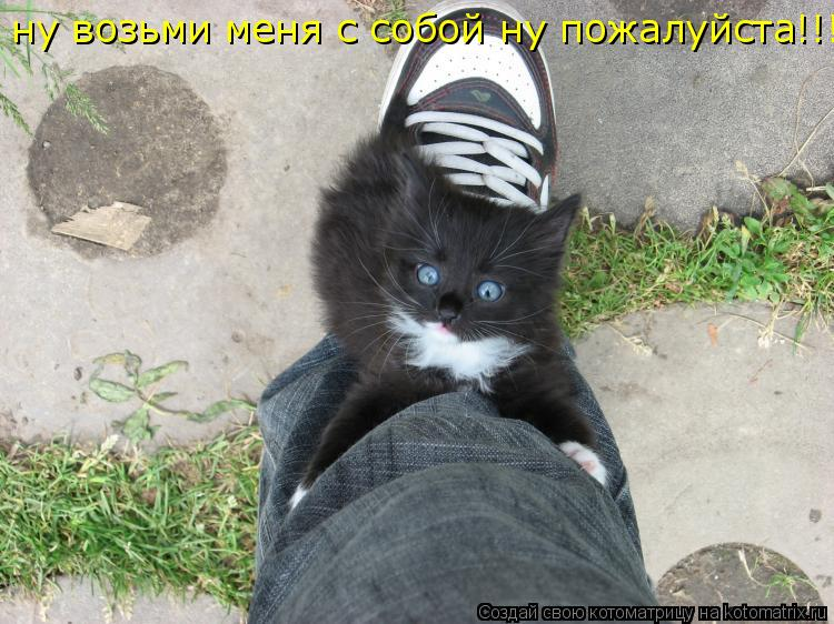 Котоматрица: ну возьми меня с собой ну пожалуйста!!!!