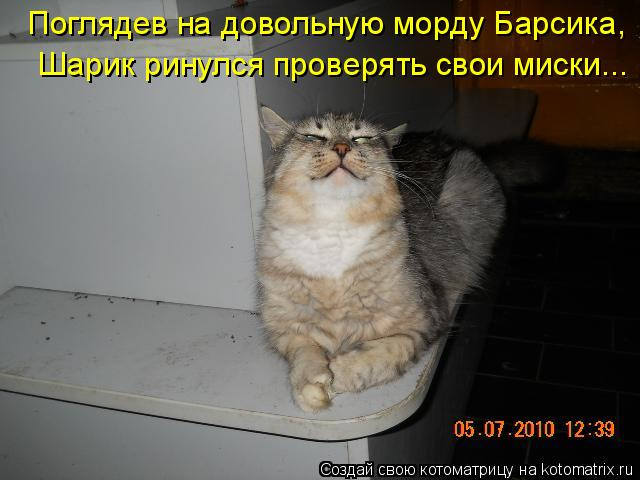 Котоматрица: Поглядев на довольную морду Барсика,  Шарик ринулся проверять свои миски...