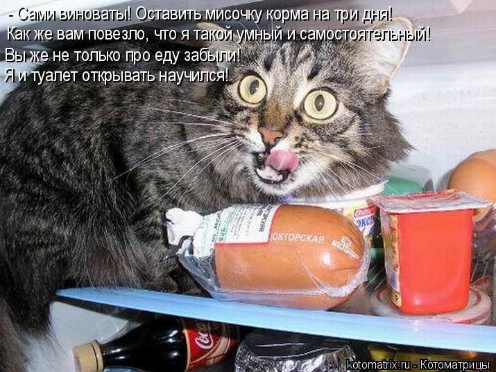 Котоматрица: - Сами виноваты! Оставить мисочку корма на три дня! Как же вам повезло, что я такой умный и самостоятельный! Вы же не только про еду забыли! Я и