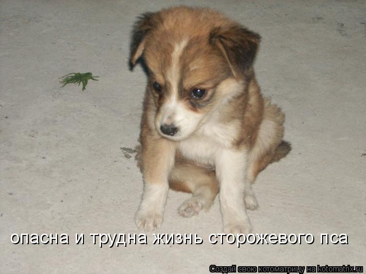 Котоматрица: опасна и трудна жизнь сторожевого пса