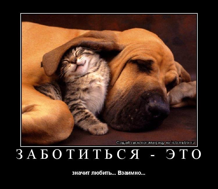 Котоматрица: Заботиться - это значит любить... Взаимно...