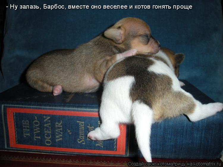 Котоматрица: - Ну залазь, Барбос, вместе оно веселее и котов гонять проще