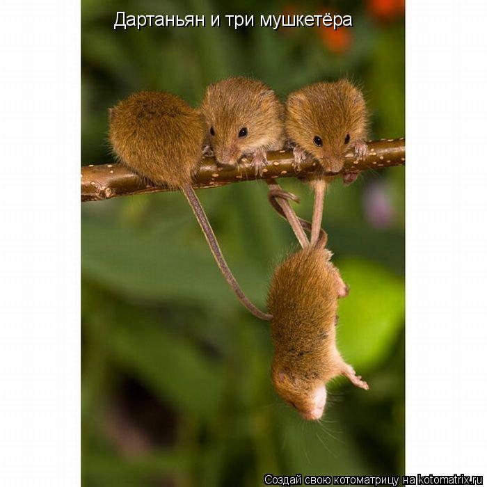 Котоматрица: Дартаньян и три мушкетёра