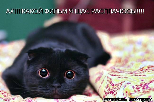 Котоматрица: АХ!!!!КАКОЙ ФИЛЬМ Я ЩАС РАСПЛАЧЮСЬ!!!!!