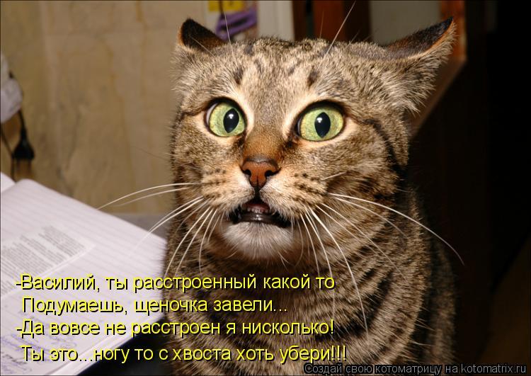 Котоматрица: -Василий, ты расстроенный какой то Подумаешь, щеночка завели... -Да вовсе не расстроен я нисколько! Ты это...ногу то с хвоста хоть убери!!!