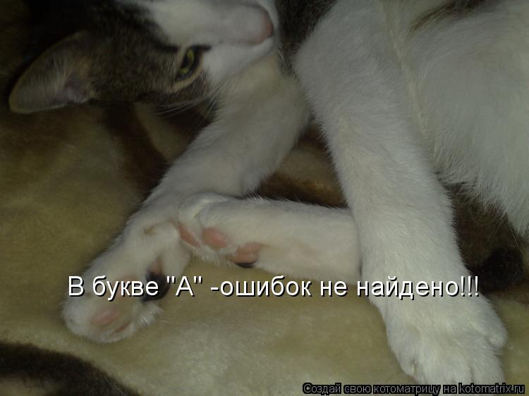 "Котоматрица: В букве ""А"" -ошибок не найдено!!!"