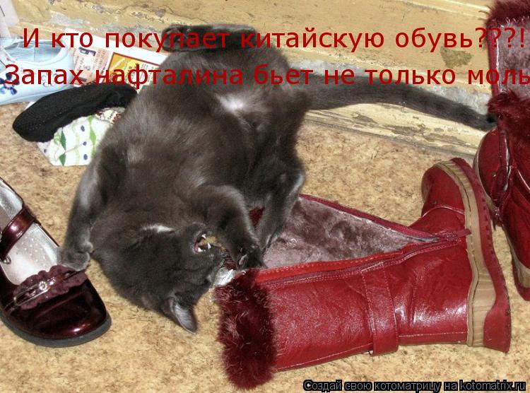 Котоматрица: И кто покупает китайскую обувь???! Запах нафталина бьет не только моль