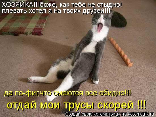 Котоматрица: да по-фиг,что смеются все обидно!!! отдай мои трусы скорей !!! ХОЗЯЙКА!!!боже, как тебе не стыдно! плевать хотел я на твоих друзей!!!