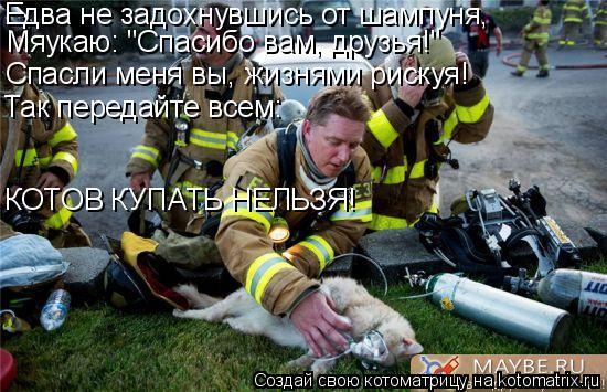 """Котоматрица: Едва не задохнувшись от шампуня, Мяукаю: """"Спасибо вам, друзья!"""" Спасли меня вы, жизнями рискуя! Так передайте всем: КОТОВ КУПАТЬ НЕЛЬЗЯ!"""