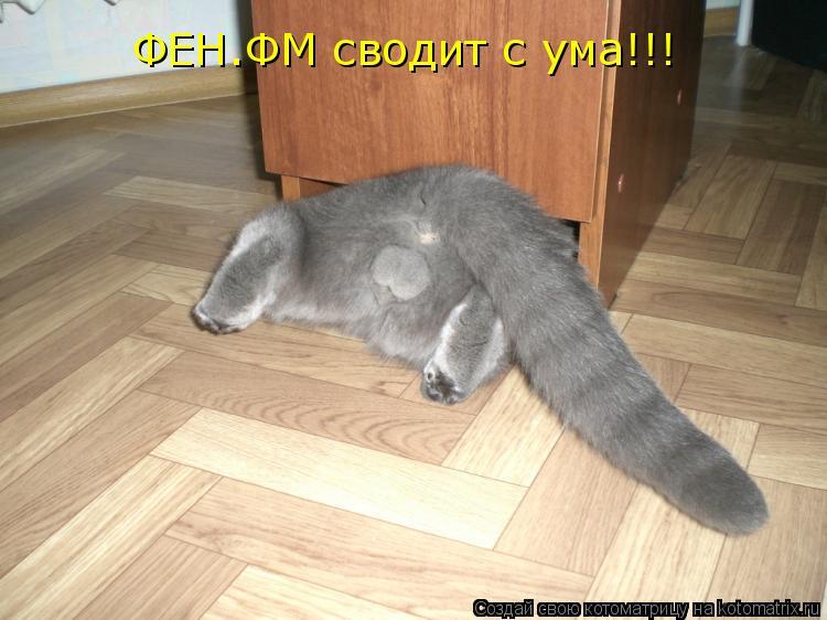 Котоматрица: ФЕН.ФМ сводит с ума!!!