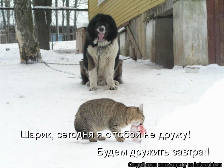 Котоматрица: Шарик, сегодня я с тобой не дружу! Будем дружить завтра!!