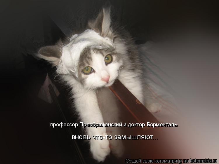 Котоматрица: профессор Преображенский и доктор Борменталь вновь что-то замышляют...