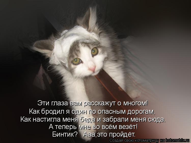 http://kotomatrix.ru/images/lolz/2010/09/27/689737.jpg
