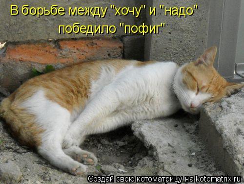 "Котоматрица: В борьбе между ""хочу"" и ""надо"" победило ""пофиг"""