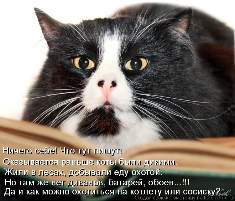 Котоматрица: Ничего себе! Что тут пишут! Оказывается раньше коты были дикими. Жили в лесах, добывали еду охотой. Но там же нет диванов, батарей, обоев...!!! Д