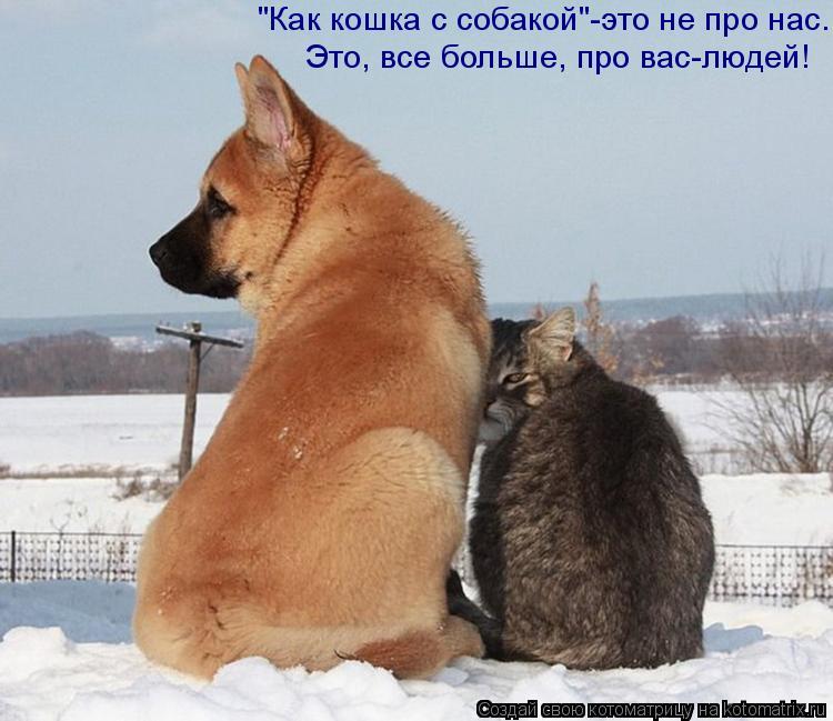 """Котоматрица: """"Как кошка с собакой""""-это не про нас.   Это, все больше, про вас-людей!"""