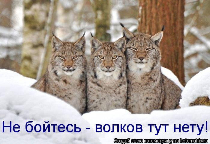 Котоматрица: Не бойтесь - волков тут нету!