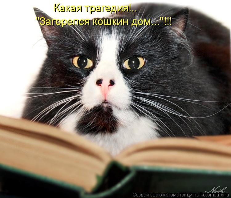"""Котоматрица: Какая трагедия!.. """"Загорелся кошкин дом...""""!!!"""