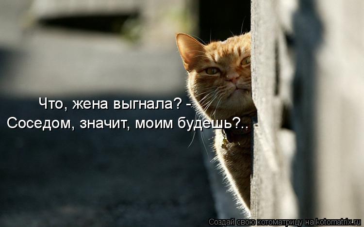 Котоматрица: Что, жена выгнала? - Соседом, значит, моим будешь?..