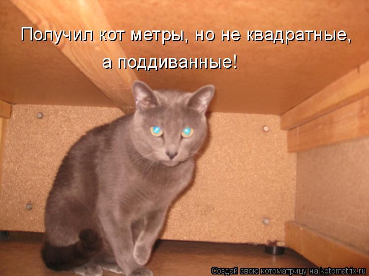 Котоматрица: Получил кот метры, но не квадратные, а поддиванные!