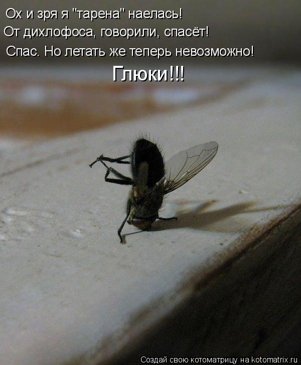 """Котоматрица: Ох и зря я """"тарена"""" наелась! От дихлофоса, говорили, спасёт! Спас. Но летать же теперь невозможно! Глюки!!!"""