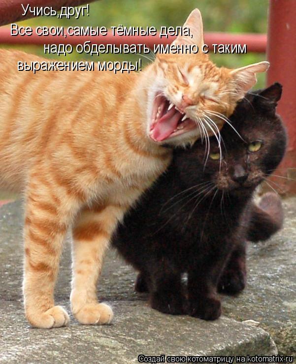 Котоматрица: Учись,друг! Все свои,самые тёмные дела, надо обделывать именно с таким  выражением морды!