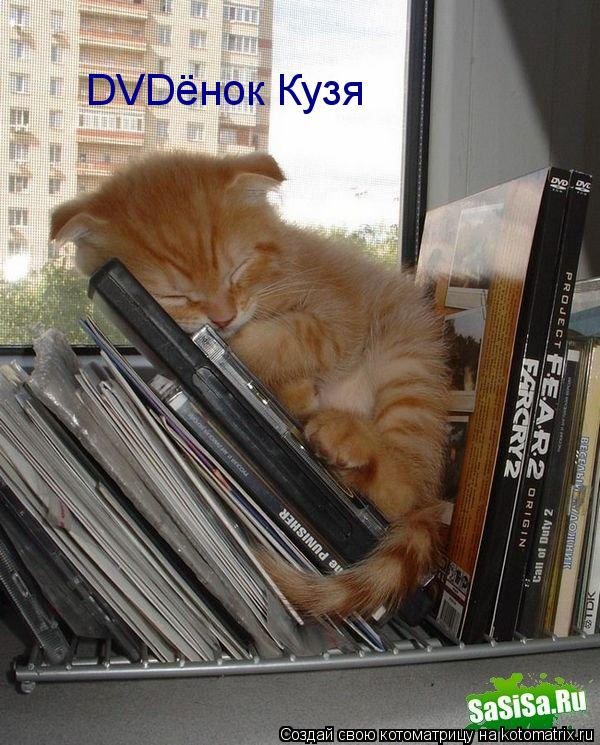 Котоматрица: DVDёнок Кузя