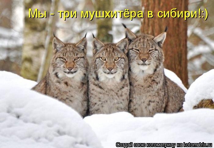 Котоматрица: Мы - три мушхитёра в сибири!:)