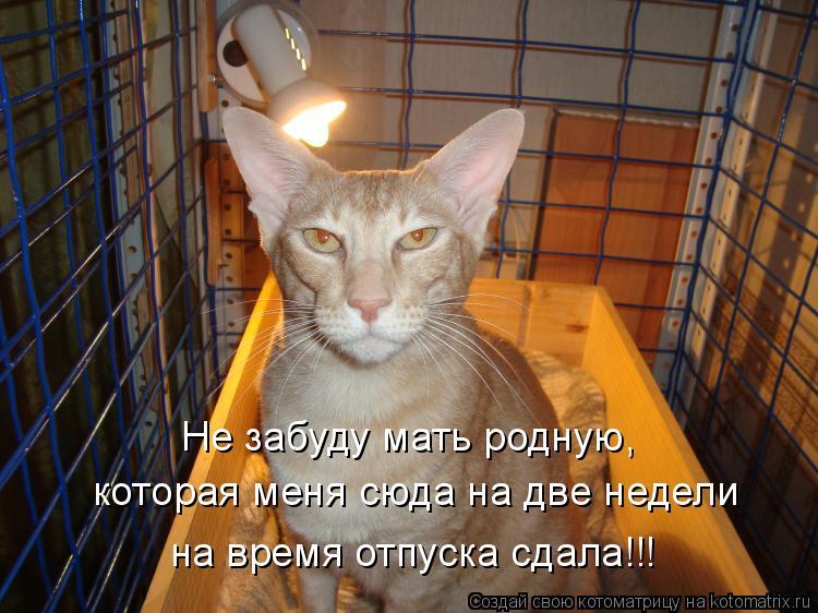 Котоматрица: Не забуду мать родную, которая меня сюда на две недели на время отпуска сдала!!!